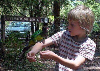 Papagei und Mel