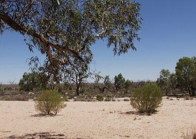 more dry lakes