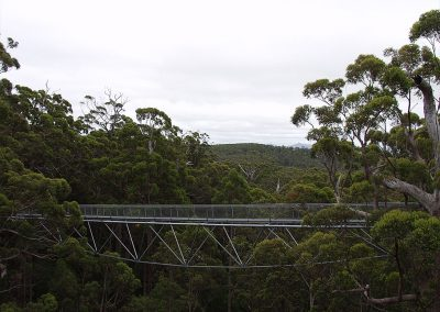Tree Top Walk Bridge