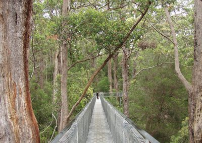 Tree Top Walk up to 60m