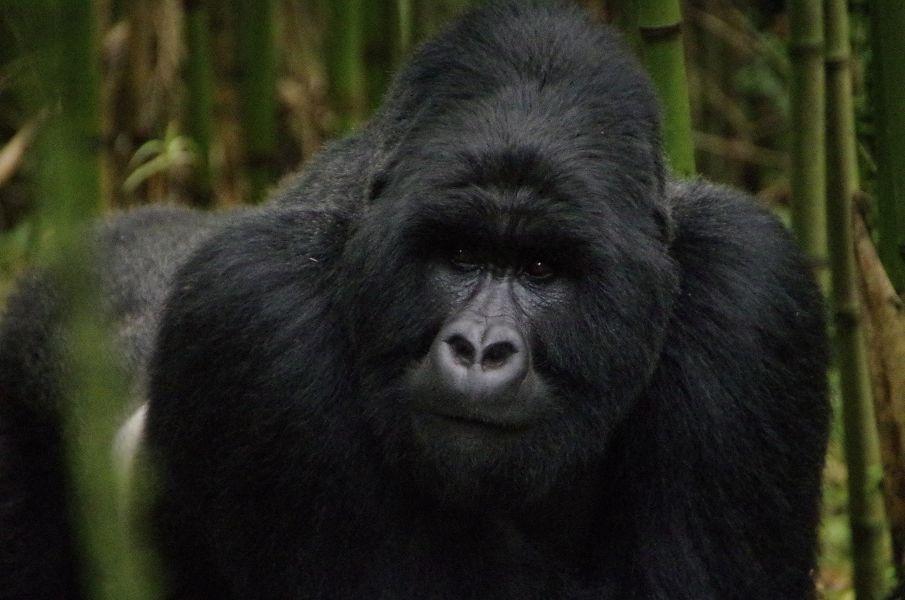 Servus Uganda – Hallo Ruanda