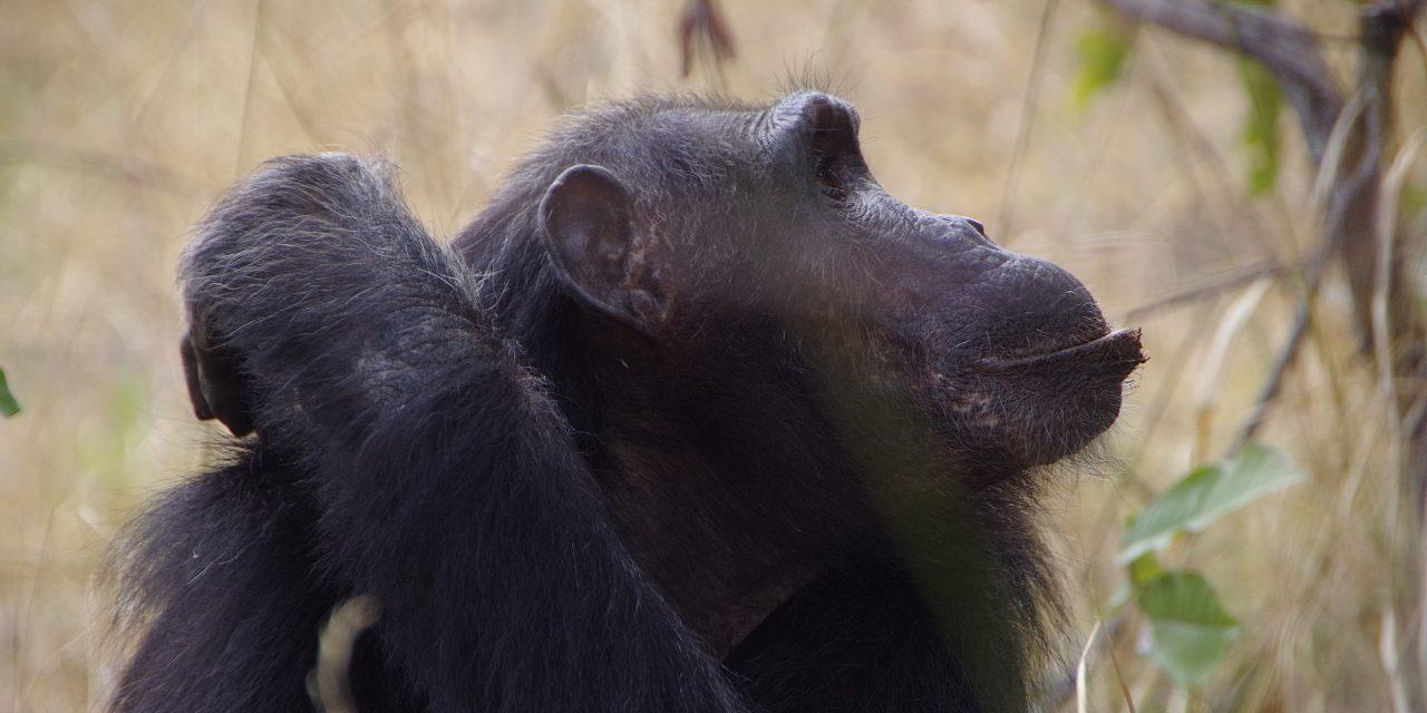 Ruanda – Burundi – Tansania