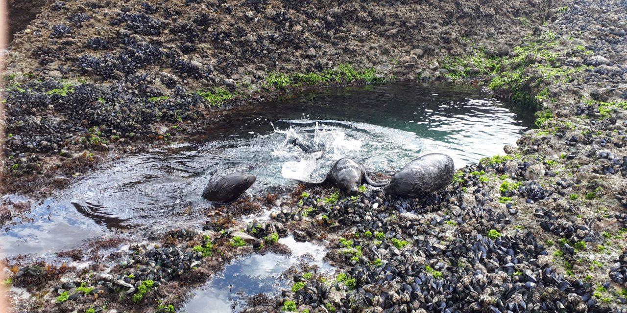 Seehunde, frei und wild und so nah